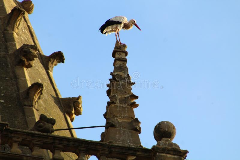 Stork in church of the sixteenth century in Briñas. Spain. A white stork perched on the pinnacle of the church tower of Nuestra Señora de la Asunción stock image