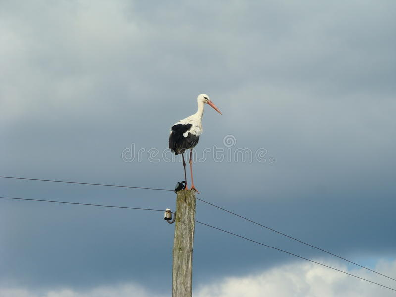 Download A Stork on a column stock image. Image of stork, clouds - 25016851