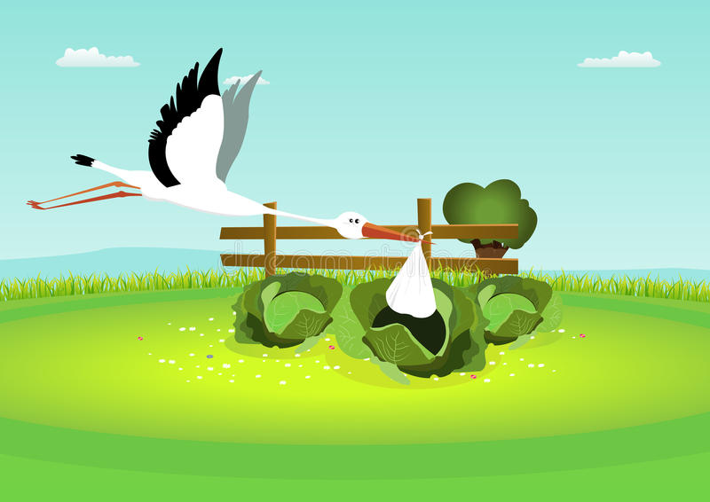 Stork Delivering Baby in Cabbage. Illustration of a stork delivering a blanket, with baby inside, in a cabbage royalty free illustration