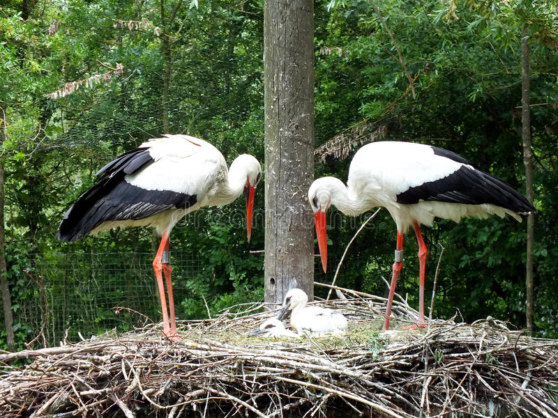 Download Stork Family Stock Photos - Image: 24846243