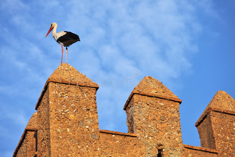 Download Stork on fortress wall stock photo. Image of chellah - 19927074