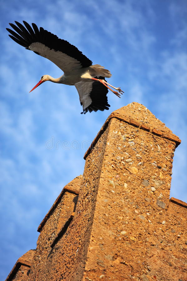 Stork On Fortress Wall Stock Photography