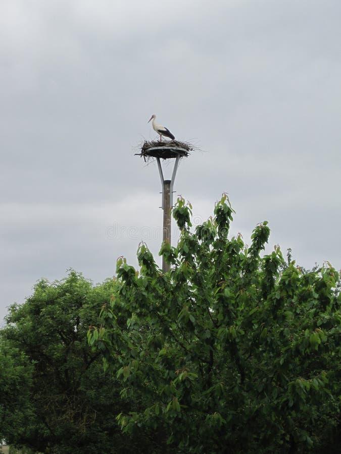 Stork i bygga bo arkivfoto