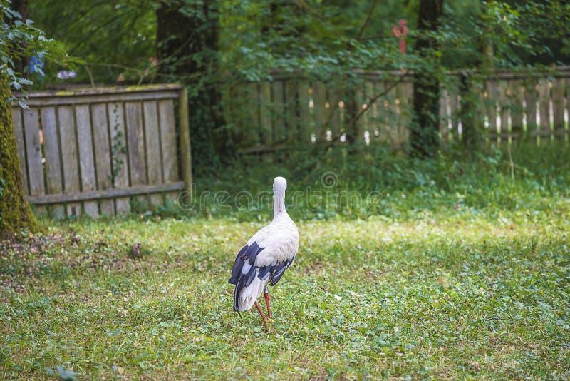 Stork i zoo på solig dag arkivfoto
