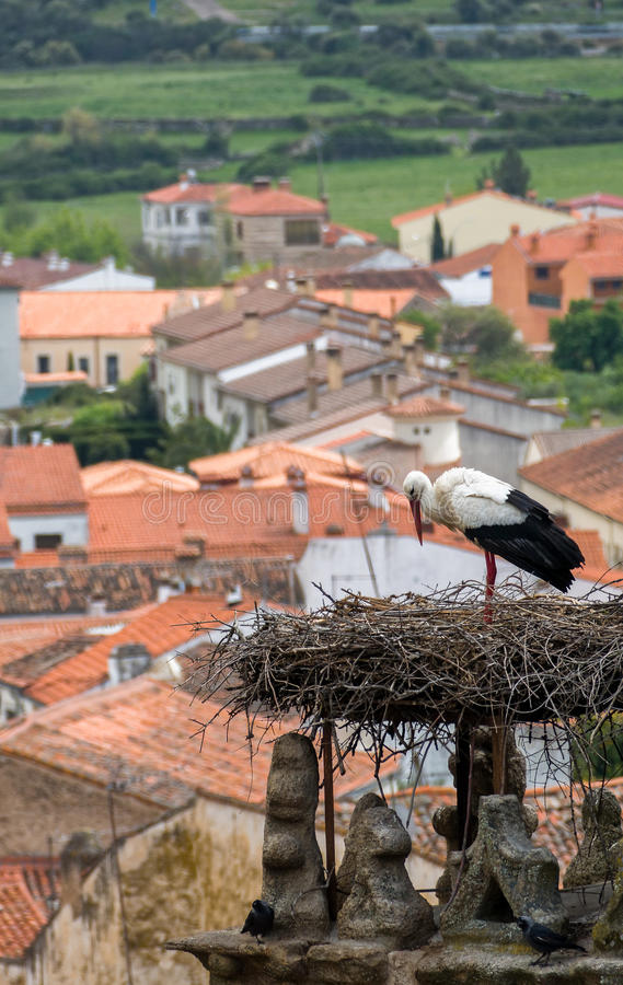 Free Stork In Trujillo Extremedura Spain Royalty Free Stock Images - 58909809