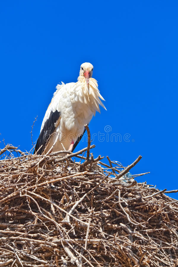Download Stork - Morocco stock photo. Image of nest, maghreb, bird - 18230694
