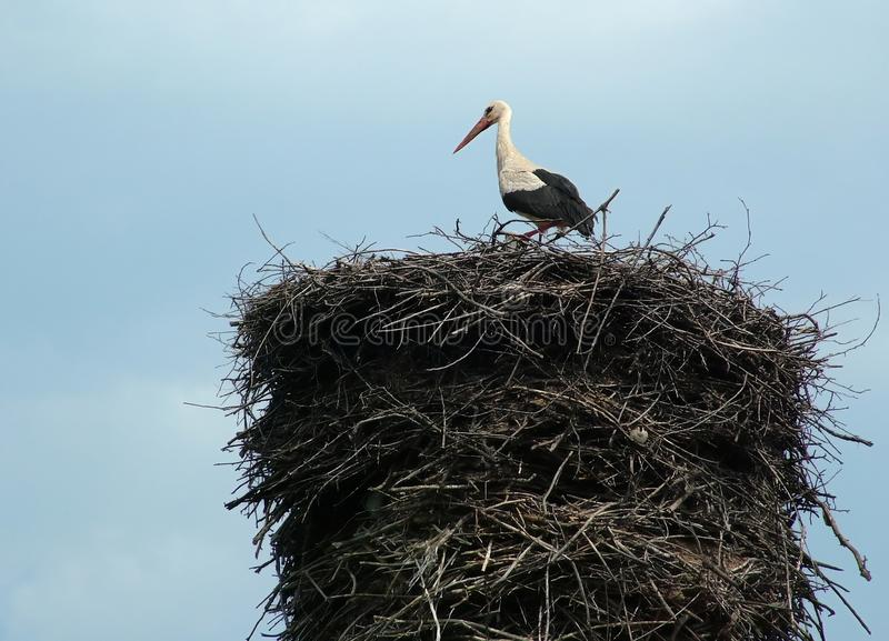 Download Stork on the nest stock image. Image of countryside, bring - 1931869
