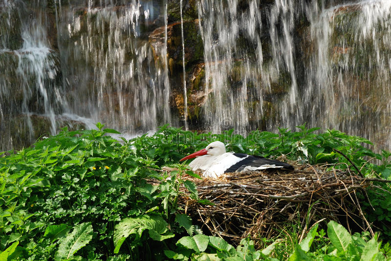 Download Stork on a nest stock image. Image of graphic, animal - 27189331