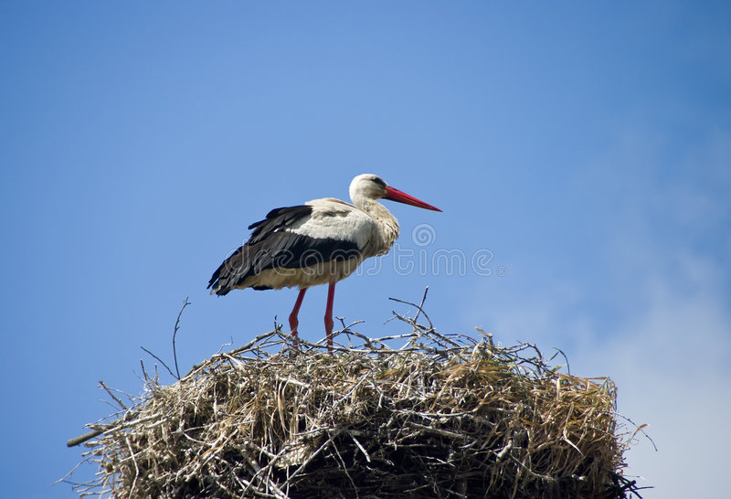 Download Stork on the nest stock image. Image of white, natural - 5393887