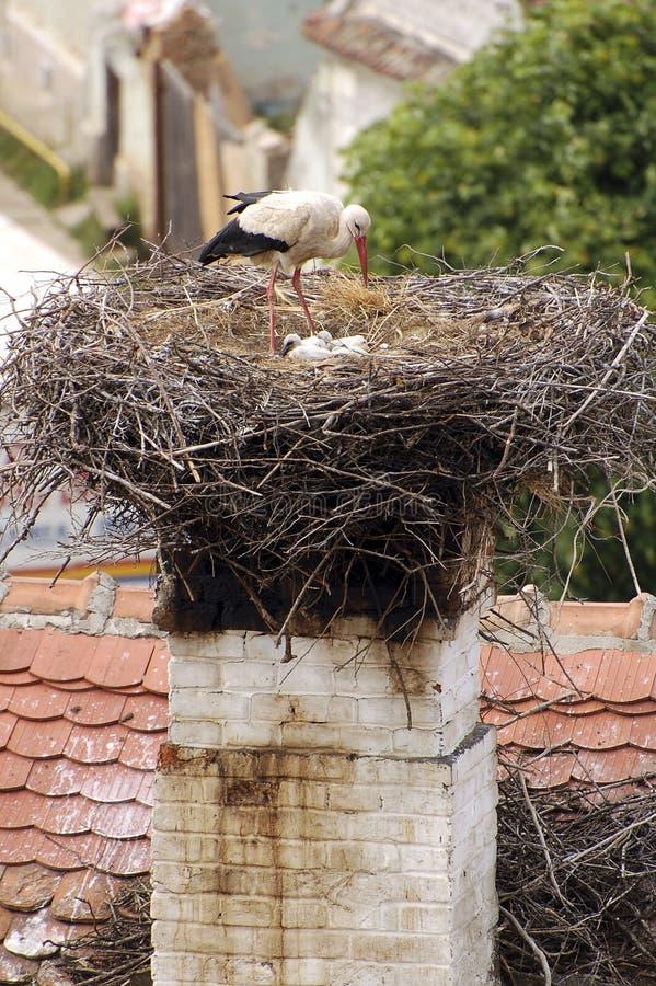 Stork nest. Stork and family in nest stock photography