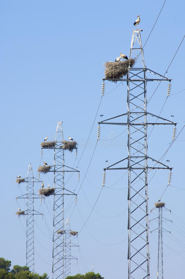 Stork nest royalty free stock photography