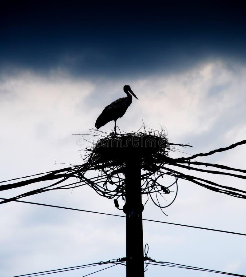 Free Stork Nest Stock Photography - 9942952
