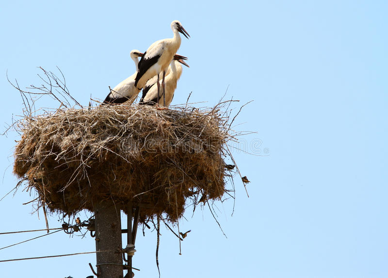 Stork on the nest. Against blue sky stock photography