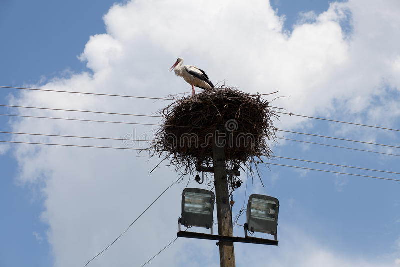 Stork nest on cables. Under white clouds on blue sky stock photography