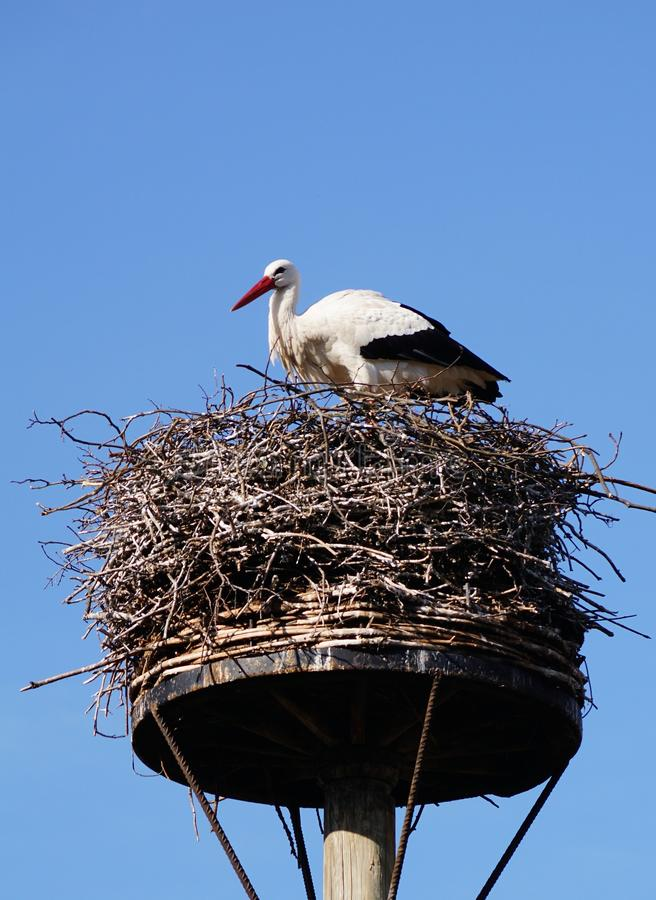 Stork nest. A stork nest high up on a tree trunk stock image