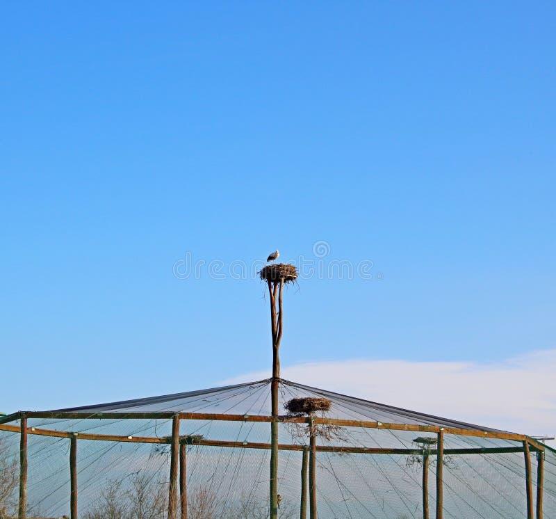 Stork nest on the pole. Big stork nest on the pole stock photography