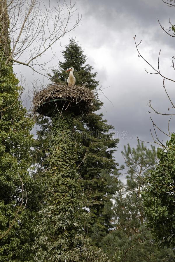 Stork in a nest royalty free stock image