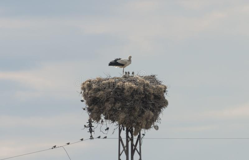 Stork Nest. A stork nest during a sunny summer day royalty free stock photos