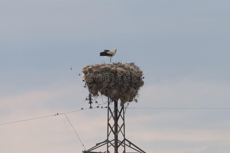 Stork Nest. A stork nest during a sunny summer day royalty free stock photography