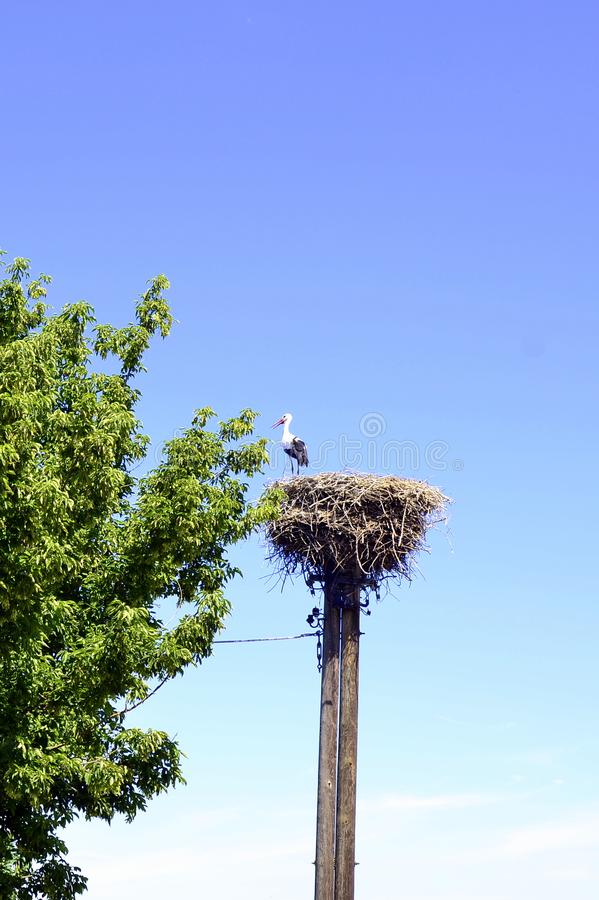 Stork on the nest on a telegraph mast. Stork stands on the nest of an old telegraph mast royalty free stock photography