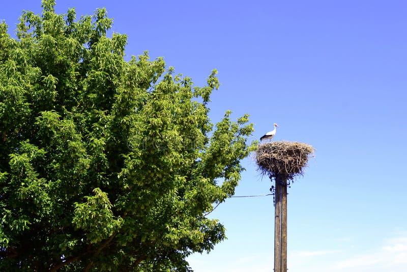 Stork on the nest on a telegraph mast. Stork stands on the nest of an old telegraph mast royalty free stock image