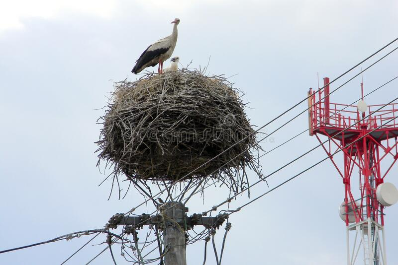 Stork nest on top of an electric pole, Komarno, Slovakia. June 29, 2011 stock photography