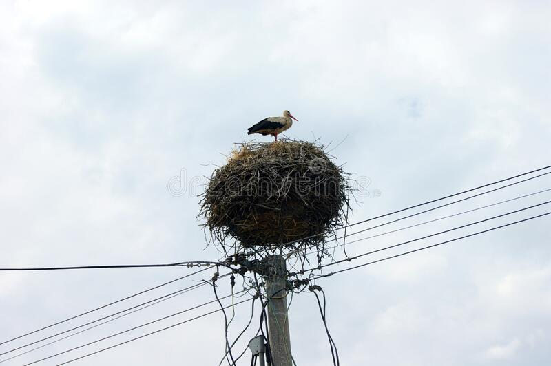 Stork nest on top of an electric pole, Komarno, Slovakia. June 29, 2011 stock photos
