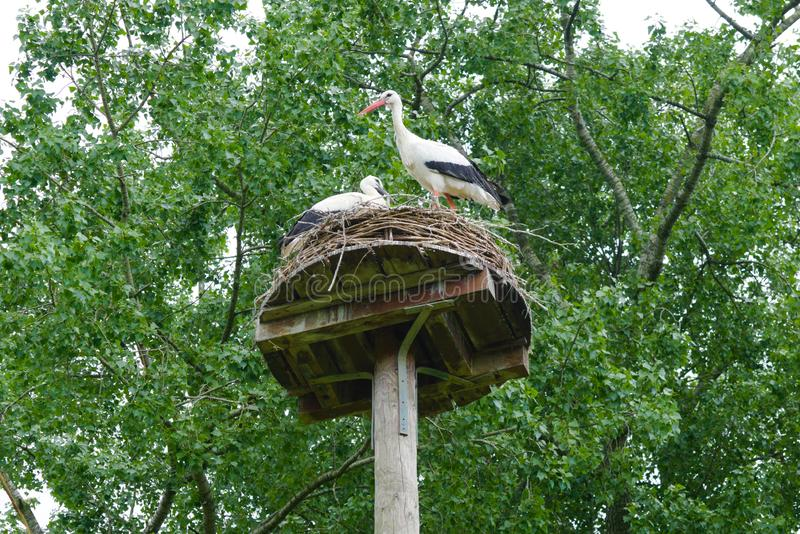 Stork nest in the vondelpark of amsterdam. Protected animal habitat stock photography