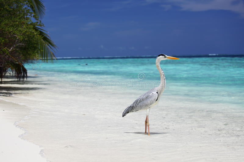 Download Stork on the ocean stock photo. Image of open, love, care - 21622652