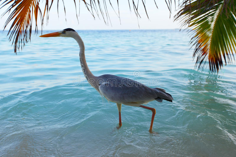 Download Stork on the ocean stock photo. Image of high, beautiful - 23352554
