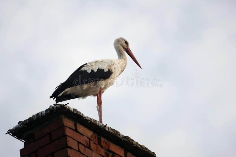 Stork på en lampglas arkivfoton