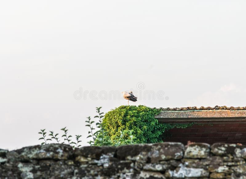 Stork relaxed on village construction royalty free stock photography