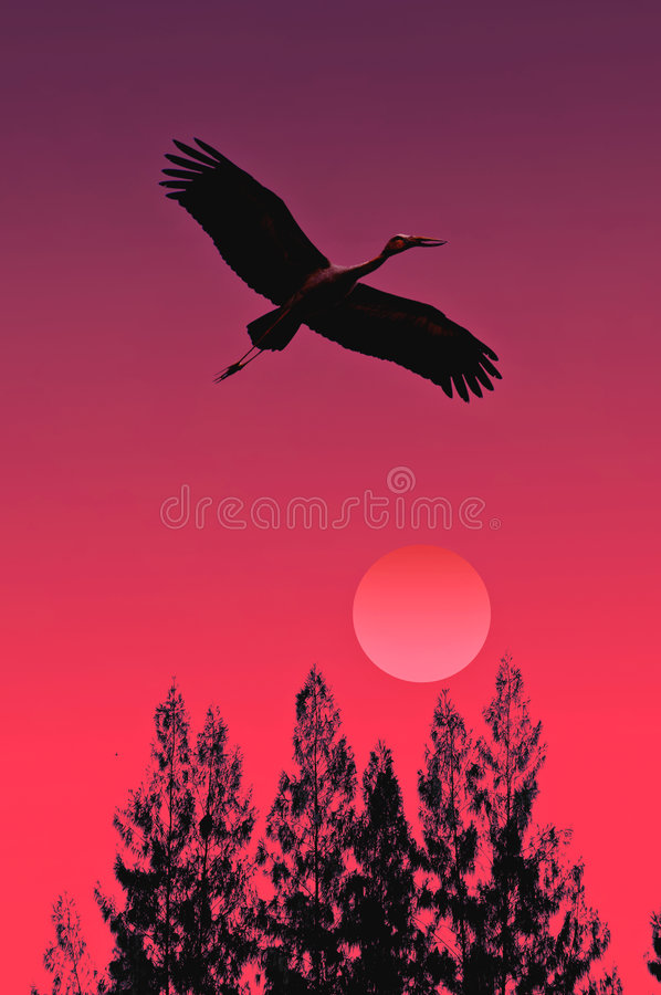 Stork rising royalty free stock photo