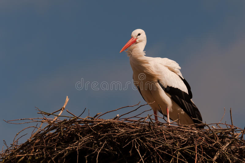 Download A Stork On Its Nest Stock Photo - Image: 16098930