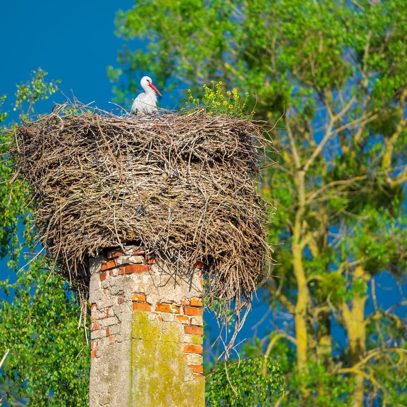 The stork sits in its nest stock photography
