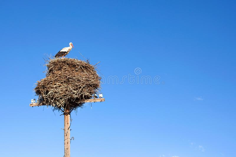 Stork sitting in a large nest on a pillar on blue sky background stock image