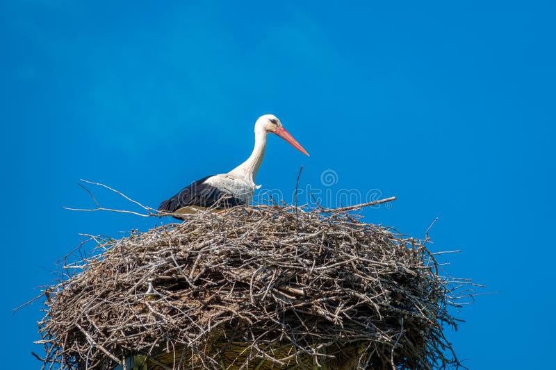 Stork stands in a nest in nice weather and blue sky stock photo