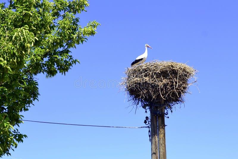 Stork on the nest on a telegraph mast. Stork stands on the nest of an old telegraph mast royalty free stock photos
