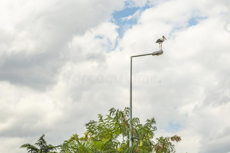 Stork on street lamp in nature and cloudy weather. Close up stork on street lamp in nature and cloudy weather royalty free stock photos