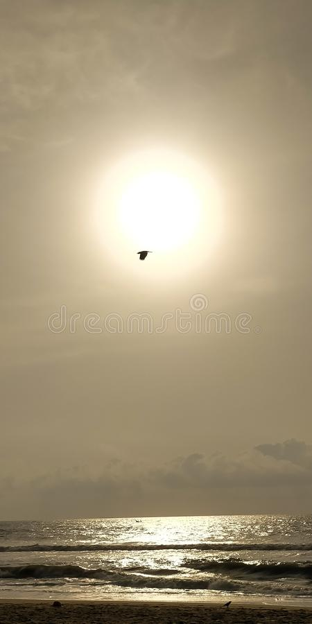 Stork by the Sun. A quick capture of a Stork flying by the Sun stock images