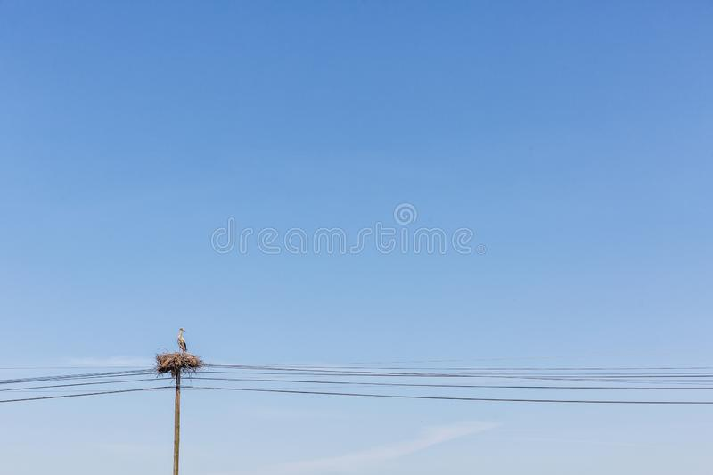 Stork on top of electricity pylon royalty free stock image
