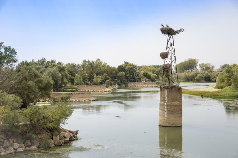 Storkar på deras reden på en kolonn i Ebro River i Alcala de Ebro, Spanien arkivfoton
