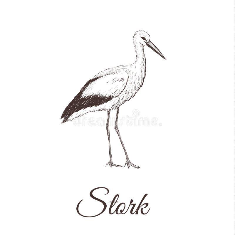 Storken är en skissateckning stock illustrationer