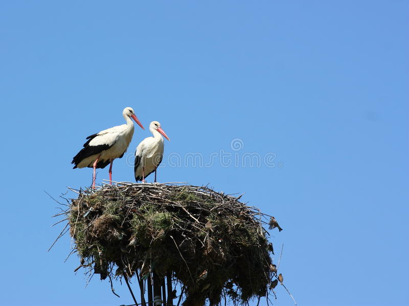 Download Storks stock image. Image of stands, coexistence, abstract - 24575405