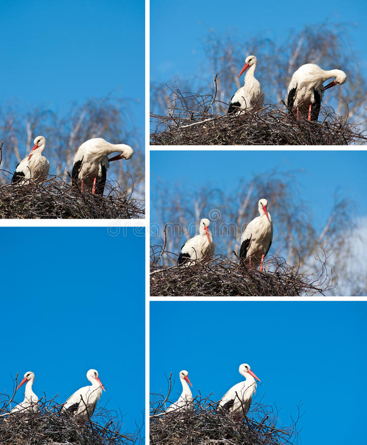 Download Storks stock photo. Image of sits, birds, collage, copyspace - 24647990