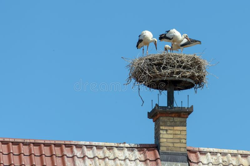 Storks nest attached to top of brick chimney royalty free stock images