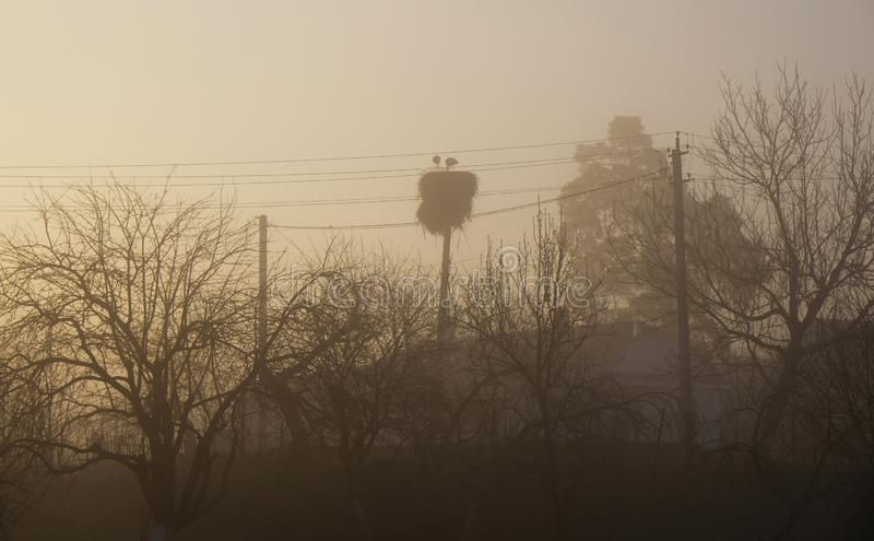 Storks nest on the background of wires and trees. Misty dawn in the village royalty free stock photography