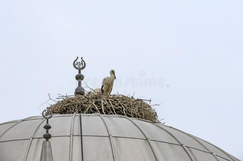 Storks in nest on mosque dome stock photography