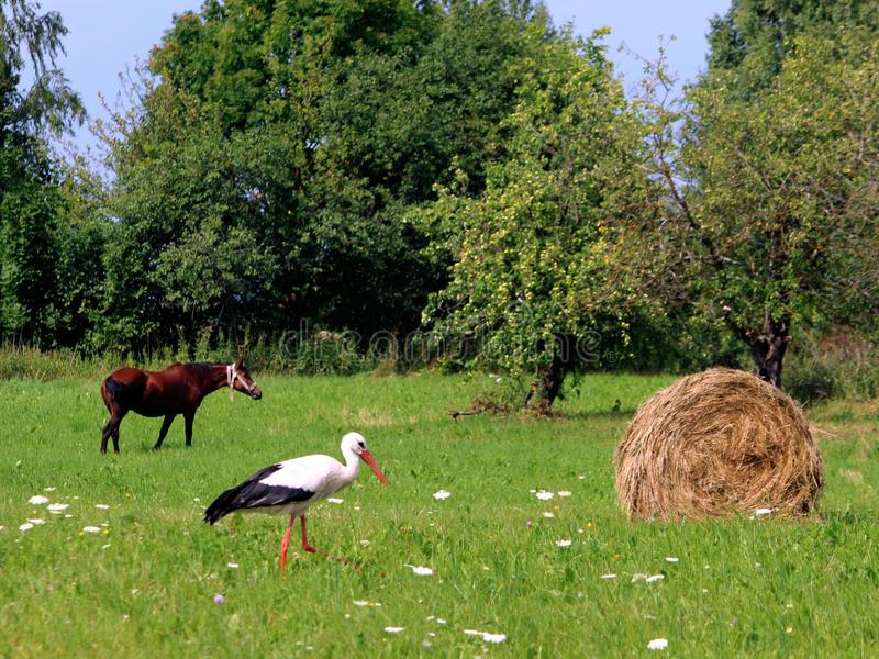 A storks and a haystack. Village. Daylight. Summer photography. stock photography