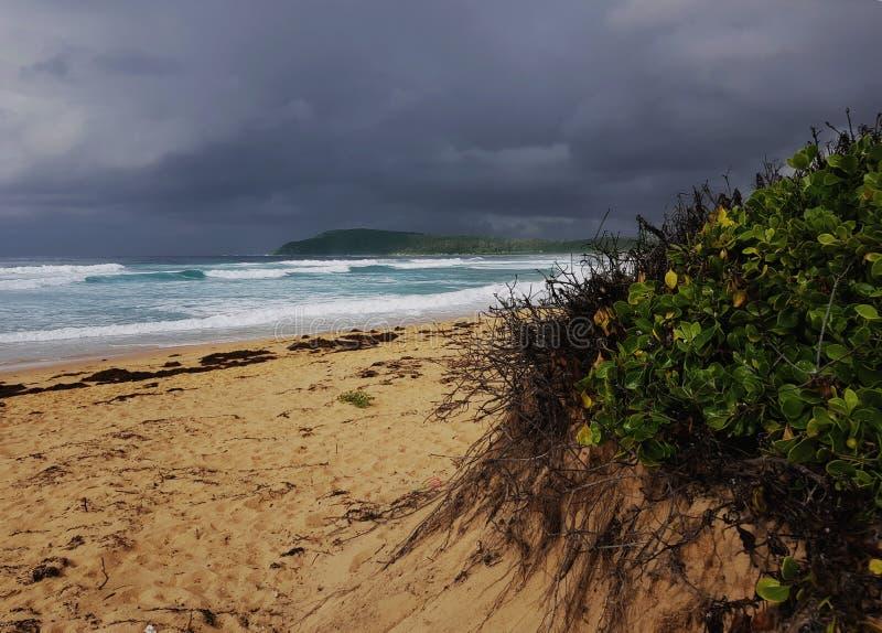 Storm över den shelly stranden på New South Wales den centrala kusten fotografering för bildbyråer